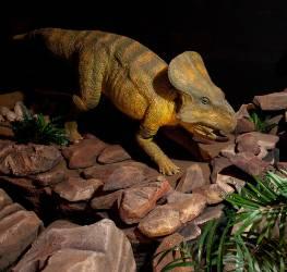 proceratops-1000.jpg