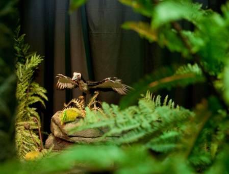 archaeopteryx-foliage-1000.jpg