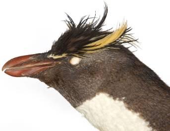 rockfeller-penguin-1000-2.jpg