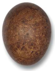 brown-egg-1000.jpg