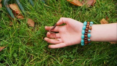 worm-large.jpg