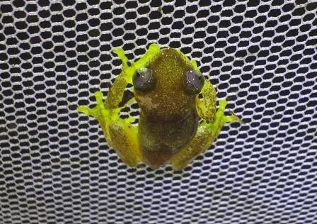 frogwebIMGA0405.JPG