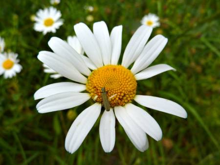 bug-white-flower.jpg