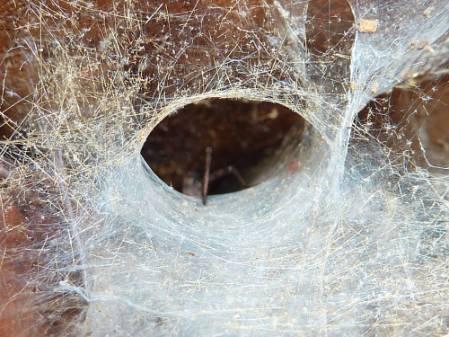 spider-web-1000.jpg