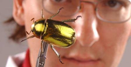 max-barclay-chafer-beetle-banner-490_35211_1.jpg