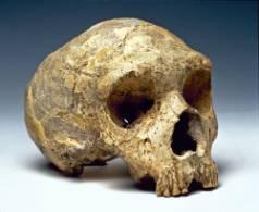 skull-NaturalHistoryMuseum_011896_IA-1000.jpg