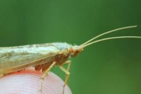 NHM-insect-wildlife-garden-.jpg