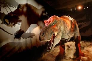 t-rex-dinosaur-gallery-copyright-natural-history-museum.jpg