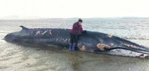 whale_989226t.jpg