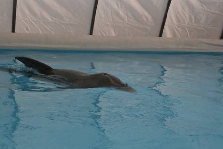 dolphin2-blog480.jpg