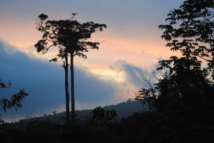 20120131-Costa-Rica-Valley-of-Silence-copyright-Natural-History-Museum.jpg