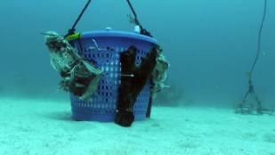 basket-underwater.jpg