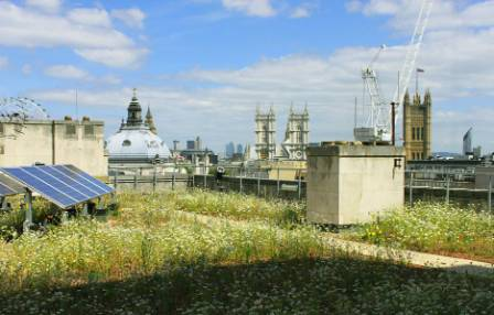 TFL-roof-by-green-roof-consultancy-2.jpg