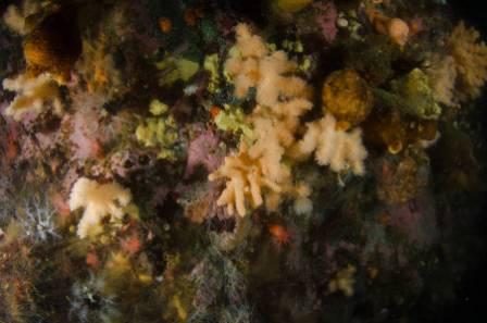 soft coral scene.JPG