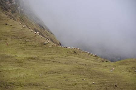 llamas_ridge_DSC_1672.JPG