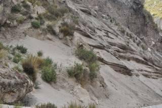 sand dunes (Mobile).JPG