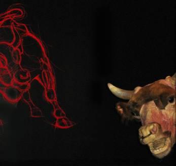 bull-installation-1000.jpg