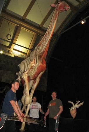 giraffe-installation.jpg