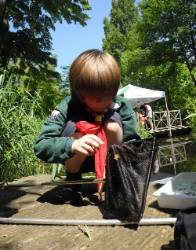 boy-pond-dipping.jpg