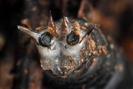 cranefly larvae.jpg