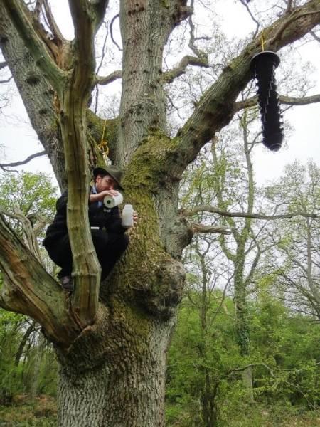 max up a tree.jpg