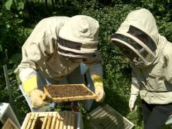 20120726-bees-on-the-comb-qais-and-helen.jpg