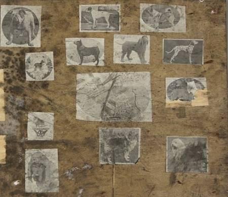 Dogs (3) (2).jpg