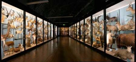 Interior, Tring Natural History Museum.jpg
