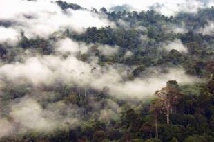 Borneo-rainforest-700x463.jpg