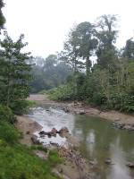 Danum Valley Conservation Area in Sabah, Borneo