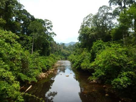 Forest-River.jpg