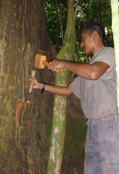 Sampling-bark.jpg