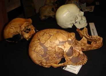 skulls-2-1000.jpg