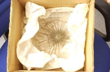 Raphidiophrys_elegans_1889_6_11_1-18k_Conservation 006_blog.jpg