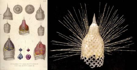 Eucyrtidium_Haeckel_Plate.jpg