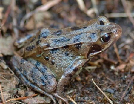 6. frog (Custom).JPG