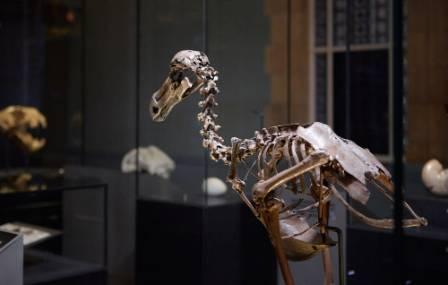dodo-gallery-1000.jpg