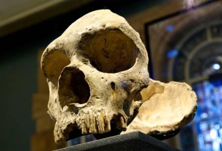 neanderthal-1200.jpg