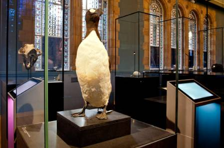 great-auk-900.jpg
