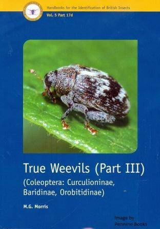 True Weevils 3.jpg
