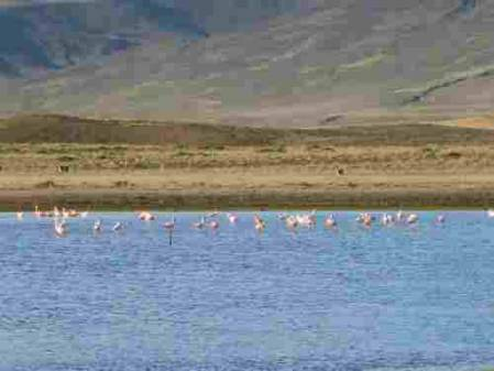 flamingos_IMG_5087.JPG