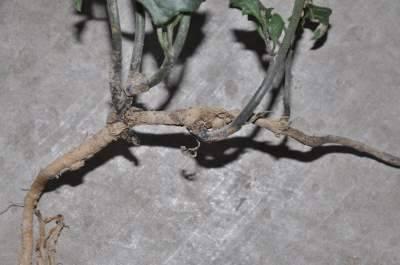 roots_DSC_6273.JPG
