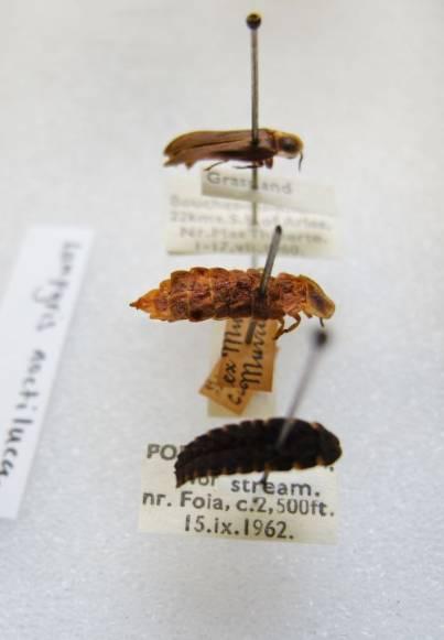Helena-Maratheftis-glow-worms-09.jpg