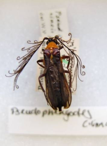 Helena-Maratheftis-glow-worms-13.jpg