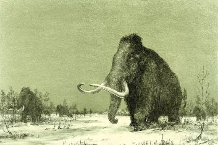 Mammoth 1.jpg