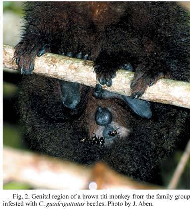 monkey bum.jpg