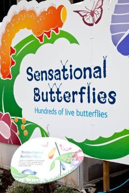 butterflies-banner-1000.jpg