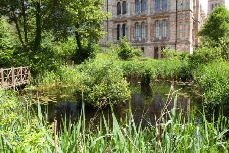 museum-garden-pond-may2012.jpg