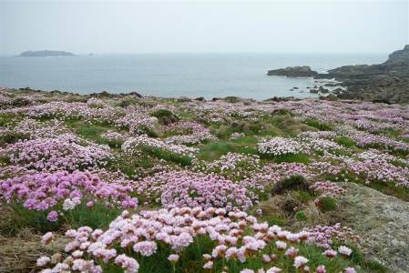 2-scilly-flora-coast (Custom).jpg