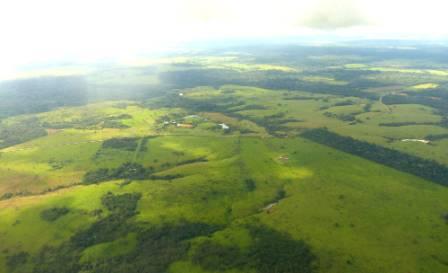 Pando pasture-small.jpg